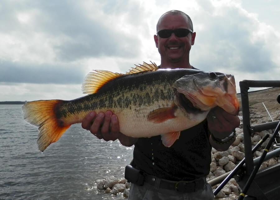 14 lb largemouth bass