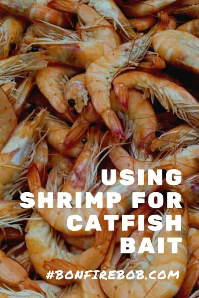 So, can you use Shrimp for catfish bait?Using shrimp for catfish bait is one of the best methods you can use when fishing for catfish. There is more to it in that - I'll cover all you need to know before you go ahead and start using shrimps as catfish bait. Be sure to check out all my others catfishing posts. #catfishbait #catfishshrimp #fishing #fishingtips #fishingbeginners #fishingtricks #shrimpbait #catfishing #catfishfishing #catfishtips #findingcatfish #fishingforcatfish #tipscatfish