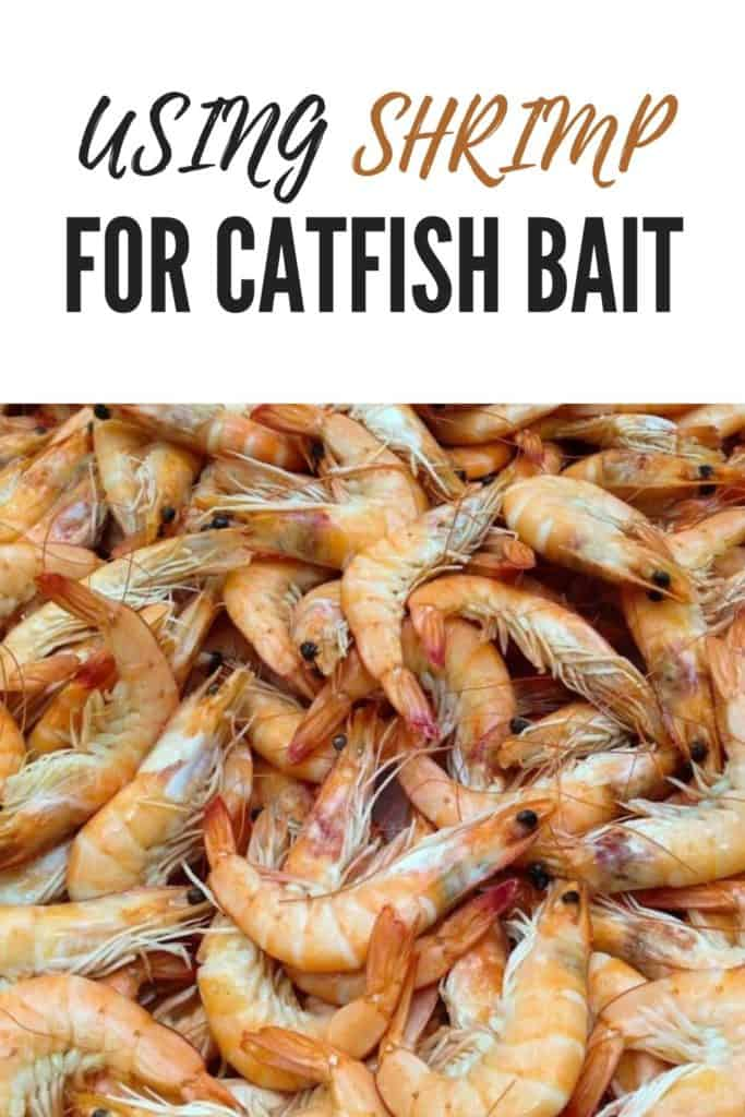 Can you use Shrimp for catfish bait?Using shrimp for catfish bait is one of the best methods you can use when fishing for catfish. There is more to it in that - I'll cover all you need to know before you go ahead and start using shrimps as catfish bait. Be sure to check out all my others catfishing posts. #catfishbait #catfishshrimp #shrimpbait #catfishing #catfishfishing #catfishtips #findingcatfish #fishingforcatfish #tipscatfish #fishing #fishingtips #fishingbeginners #fishingtricks