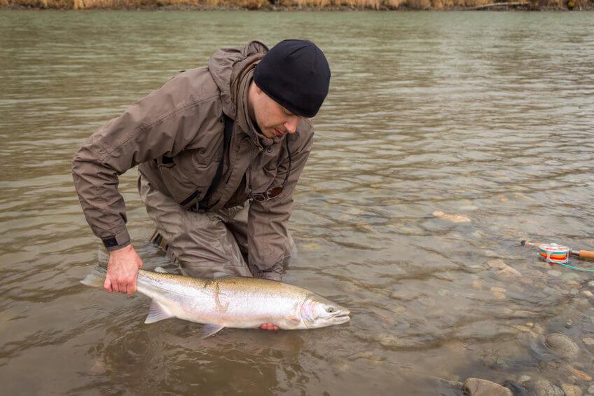 angler releasing a steelhead rainbow trout