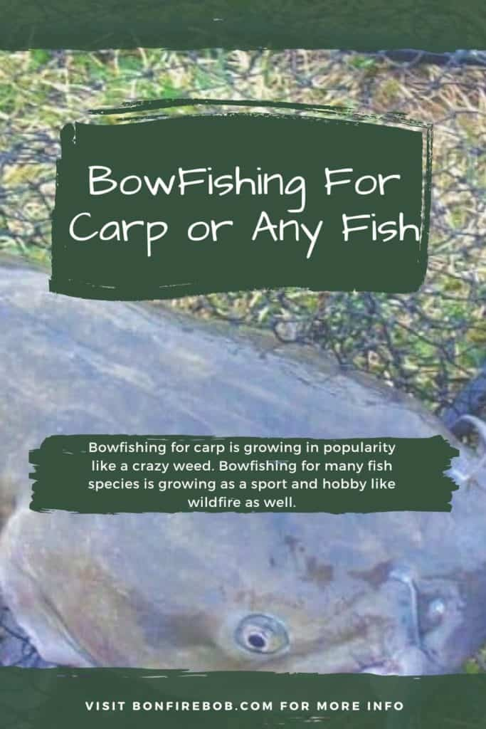 Bowfishing for carp or any fish. This is my ultimate guide on how to get started bowfishing for carp og any fish. Bowfishing is a must-try if you are into fishing. #carpfishing #catchingcarp #carptips #findingcarp #fishingbeginners #carpspawn #fishingforcarp #tipscarp #fishing #carpbite #fishingtips