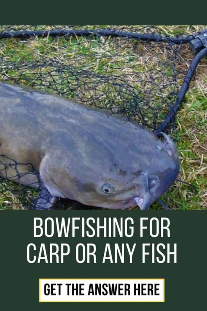 Bowfishing for carp or any fish. This is my ultimate guide on how to get started bowfishing for carp og any fish. Bowfishing is a must-try if you are into fishing. #fishingbeginners #carpspawn #carptips #findingcarp #fishingforcarp #tipscarp #fishing #carpbite #fishingtips #carpfishing #catchingcarp
