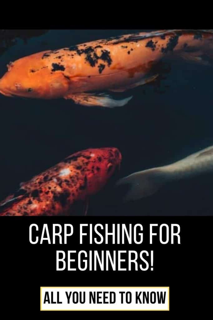 Carp fishing for beginners. Read my complete guide on how to get started catching carp with ease. The guide includes my best tips and tricks for catching carp. #carpfishing #catchingcarp #carptips #findingcarp #fishingforcarp #tipscarp #fishing #carpbite #fishingtips #fishingbeginners #carpspawn