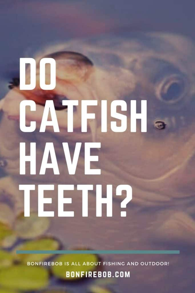 Do catfish have teeth and do they bite? Learn all you need to know about catfish teeth right here. #catfishing #catchingcatfish #catfishing #catfishfishing #catfishtips #catfishbite #fishingbeginners #catfishspawn #fishing #fishingforcatfish #fishingtips