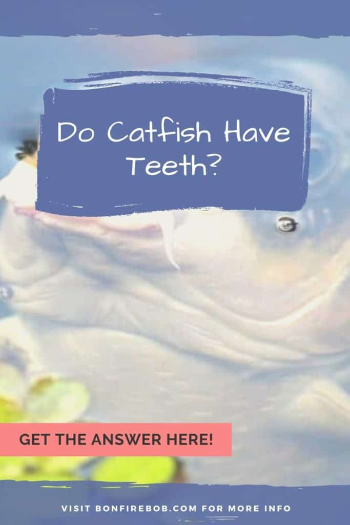 Do catfish have teeth and do they bite? Learn all you need to know about catfish teeth right here. #fishingbeginners #catfishspawn #catfishing #catfishfishing #catfishtips #catfishing #catchingcatfish #findingcatfish #fishingforcatfish #tipscatfish #catfishbite