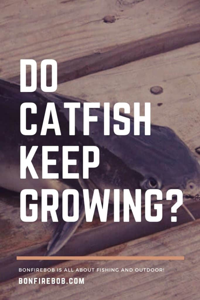 Do catfish keep growing? Learn all about the size of catfish in my easy to read guide. #tipscatfish #findingcatfish #fishingforcatfish #catfishing #catfishfishing #catfishtips #catfishing #catchingcatfish #fishingbeginners #catfishspawn #catfishbite