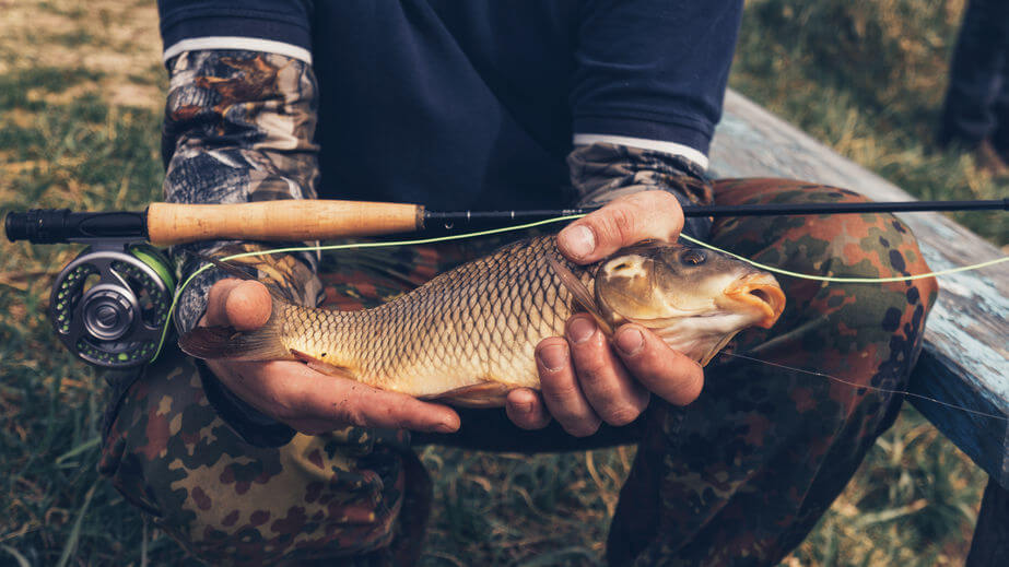 fisherman holds carp in his hand