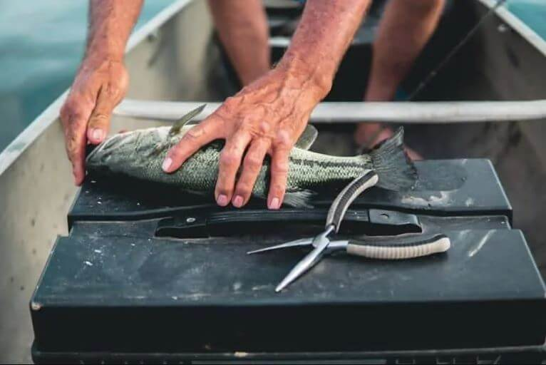 fisherman in boat holding fish and fishing pliers
