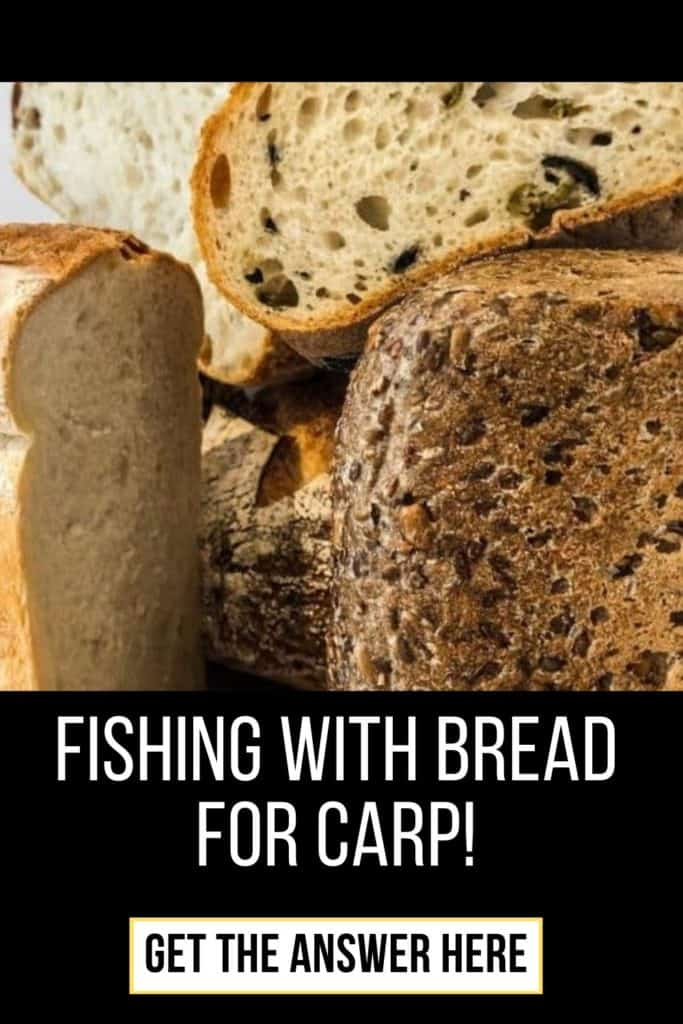 Fishing with bread for carp. Fishing With Bread For Carp is an easy tactic that also carriers more perks than some other popular baits anglers use to catch carp around the world. Read more here. #fishingforcarp #tipscarp #fishing #carptips #findingcarp #carpbite #fishingtips #fishingbeginners #carpspawn #carpfishing #catchingcarp