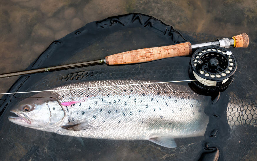 fly fishing rod and reel and caught sea trout