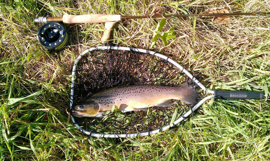 fly fishing rod and trout in fishing landing net