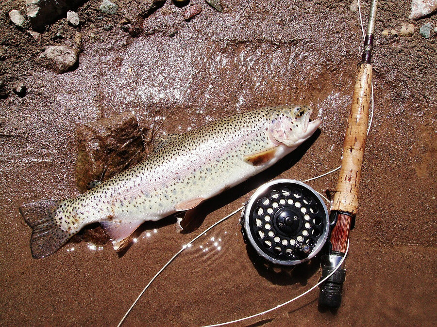 fly fishing rod with reel and trout