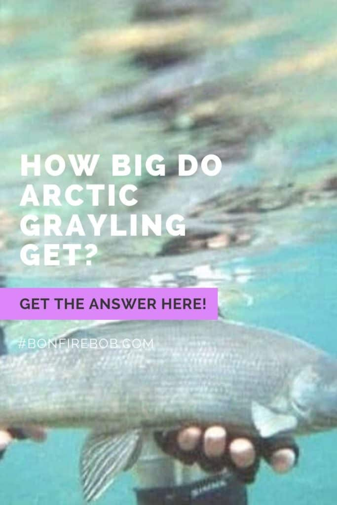 How big do Arctic Grayling get? Read my article on the size of an Arctic Grayling. #fishing #arcticgraylingfishing #catchgrayling #catcharcticgraying #arcticgrayling #graylingfishing #graylingflyfishing #arcticgraylingfish #graylingfish