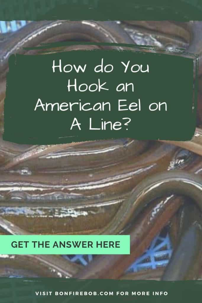 How do you hook an American Eel on a line? This is my guide on how to hook an American Eel on a line with ease. #americaneel #americaneelfish #eelfish #eelfishtank #catcheel #eelfishing #catchamericaneel #eelfishing #fishingforeel