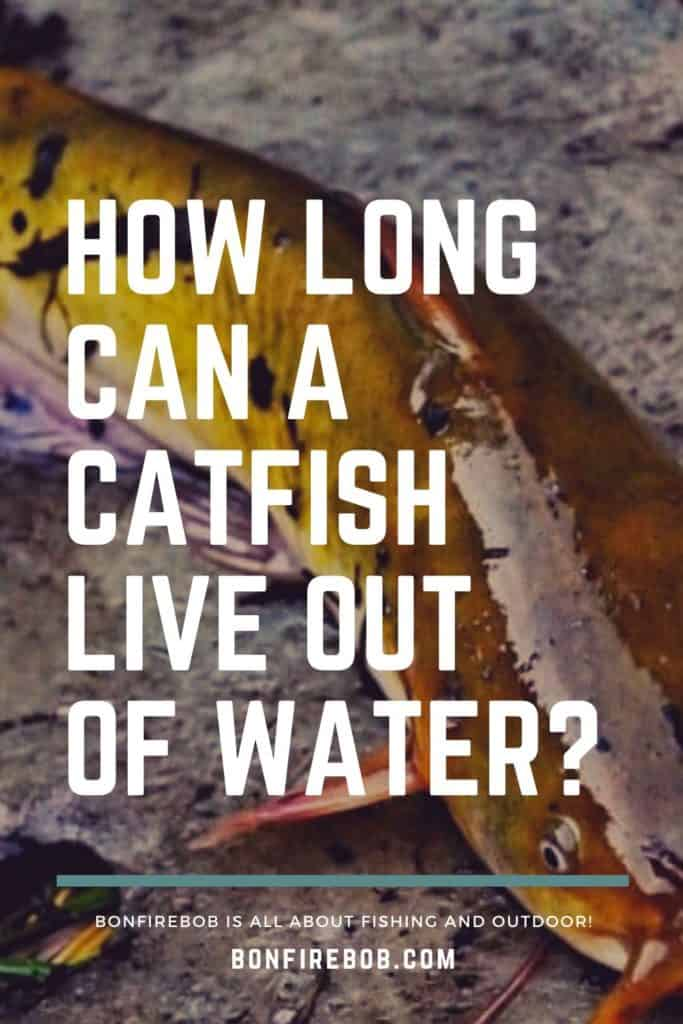 How long can a catfish live out of water? I've got the answer for you right here. Lean all you need to know about catfish here. #fishingbeginners #catfishspawn #catfishing #catfishfishing #catfishtips #findingcatfish #fishingforcatfish #tipscatfish #catfishbite #catfishing #catchingcatfish