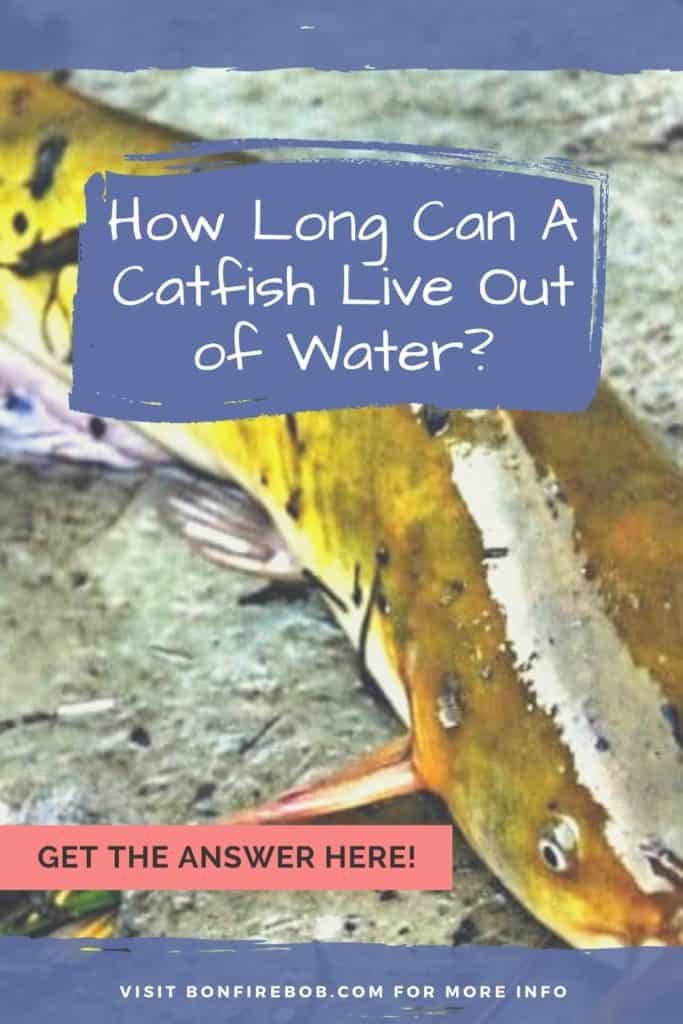How long can a catfish live out of water? I've got the answer for you right here. Lean all you need to know about catfish here. #fishing #fishingforcatfish #tipscatfish #catfishing #catfishfishing #catfishtips #fishingbeginners #catfishspawn #catfishing #catchingcatfish #catfishbite