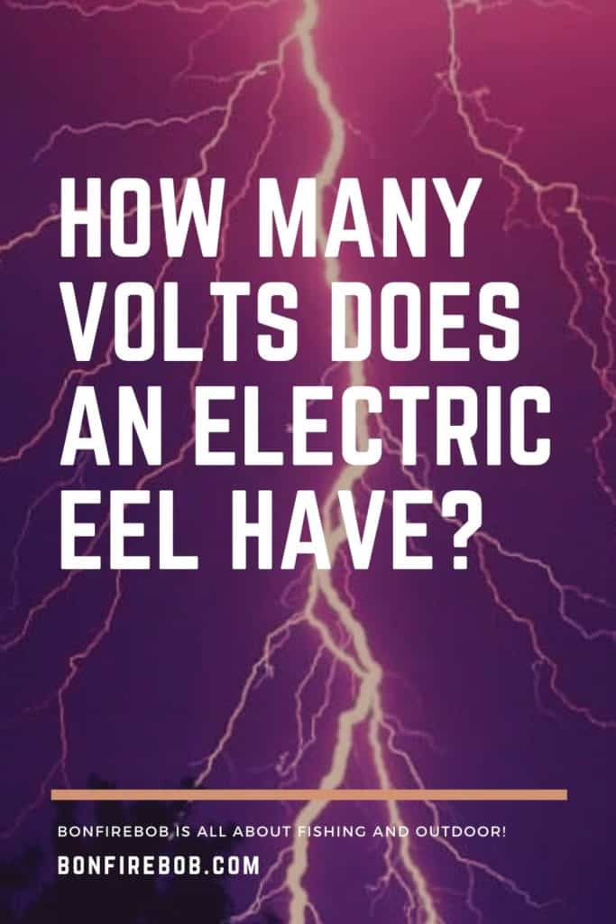 How many volts does an electric eel have? Eels are know for there electricity and I've researched how many volts a South American, electric eel have. Get the answer here. #americaneel #americaneelfish #eelfish #eelfishtank #eelfishing #fishingforeel #catcheel #eelfishing #catchamericaneel