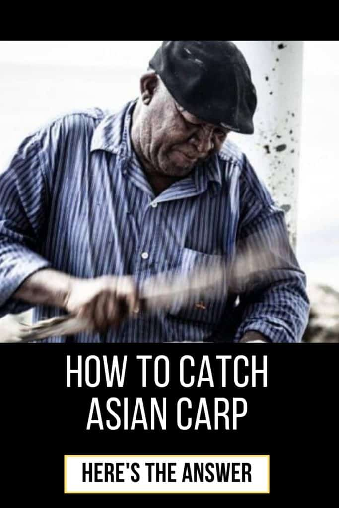 How to catch Asian Carp. Bows, arrows and poles? Catching Asian Carp is fairly easy but you need to know when, where and how. This in my guide on how to catch Asian Carp. #fishingbeginners #carpspawn #carptips #findingcarp #carpfishing #catchingcarp #fishingforcarp #tipscarp #fishing #carpbite #fishingtips