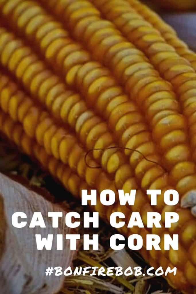 Catch carp with corn. It is possible to catch carp with corn - just read my east-to-read guide on how to catch carp with corn and you'will be ready for your next fishing trip. #carpcorn #cornbait #carpbaitcorn #howtocatchcarpwithcorn #corncarp #carpbait #bestcarpbait #carpfishing #carpfish #fishingcarp #fishingforcarp #carpfishingbeginner #carptrick #carpfishingtrick #catchcarp #carpcatching