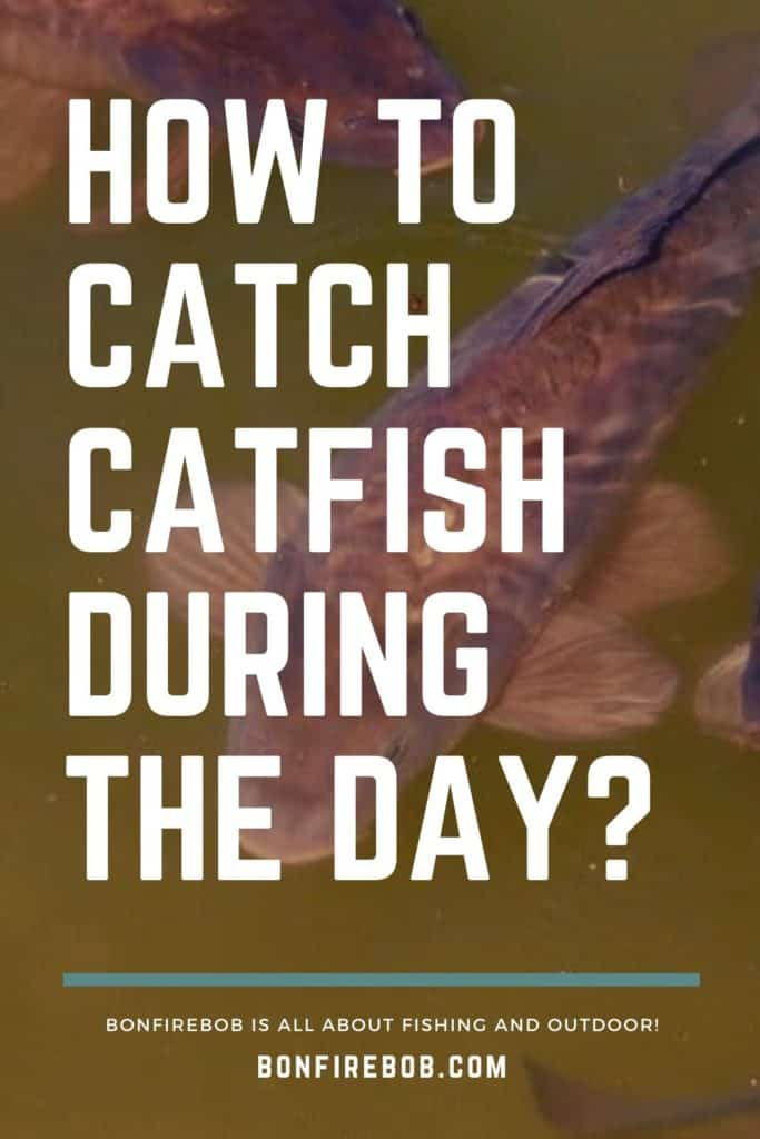 Can you catch catfish during the day? You can, but you need the right gear, bait, and patience to catch catfish during the day. #catfishing #catchingcatfish #catfishing #catfishfishing #catfishtips #findingcatfish #tipscatfish #fishingforcatfish #catfishbite #fishingbeginners #catfishspawn