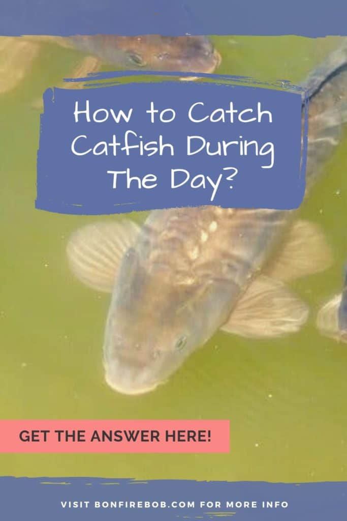 Can you catch catfish during the day? You can, but you need the right gear, bait, and patience to catch catfish during the day. #catfishing #catchingcatfish #catfishing #catfishfishing #catfishtips #tipscatfish #fishingforcatfish #fishingtips #fishingbeginners #catfishspawn #catfishbite