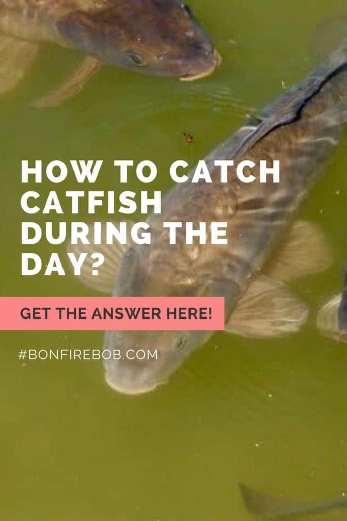 Can you catch catfish during the day? You can, but you need the right gear, bait, and patience to catch catfish during the day. #tipscatfish #fishingtips #fishing #catfishing #catchingcatfish #catfishbite #fishingbeginners #catfishspawn #catfishing #catfishfishing #catfishtips