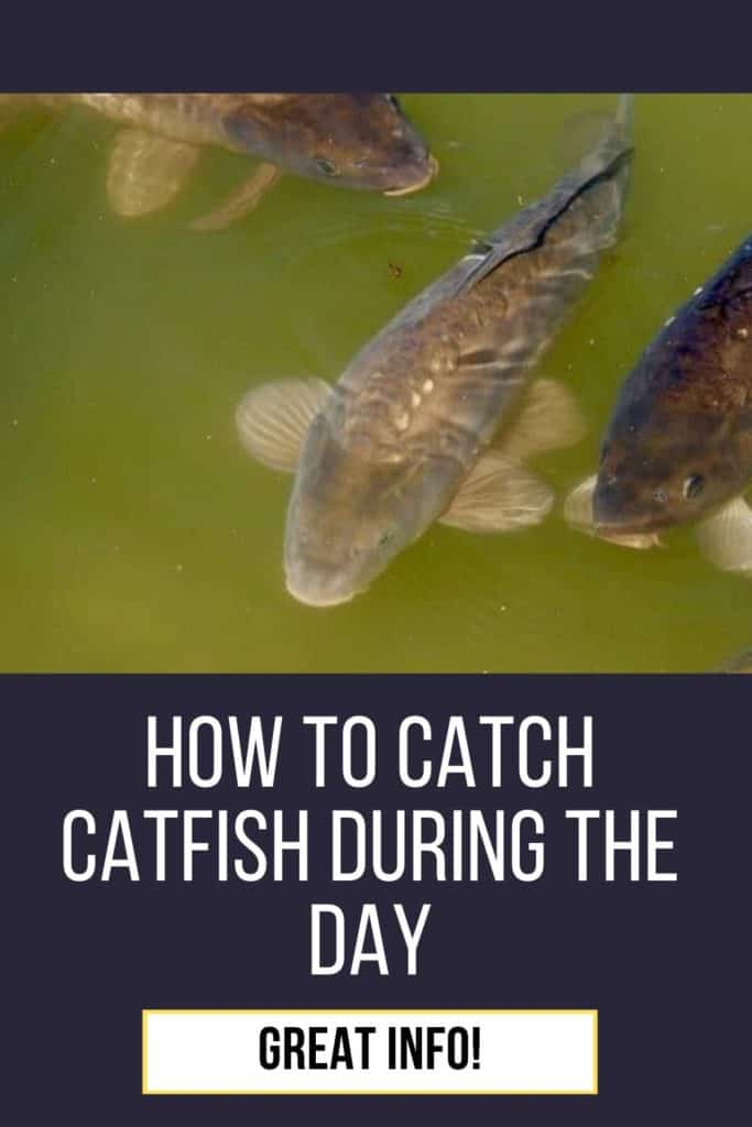 Can you catch catfish during the day? You can, but you need the right gear, bait, and patience to catch catfish during the day. #fishing #tipscatfish #fishingtips #catfishbite #catfishing #catchingcatfish #fishingbeginners #catfishspawn #catfishing #catfishfishing #catfishtips