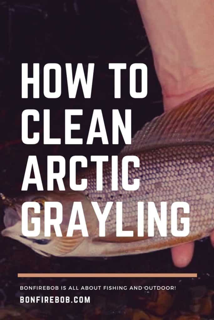 How to clean Arctic Grayling? Learn how to quickly clean an Arctic Grayling with this guide in 7 steps. #fishing #arcticgraylingfishing #catchgrayling #catcharcticgraying #graylingfishing #graylingflyfishing #arcticgraylingfish #graylingfish #arcticgrayling