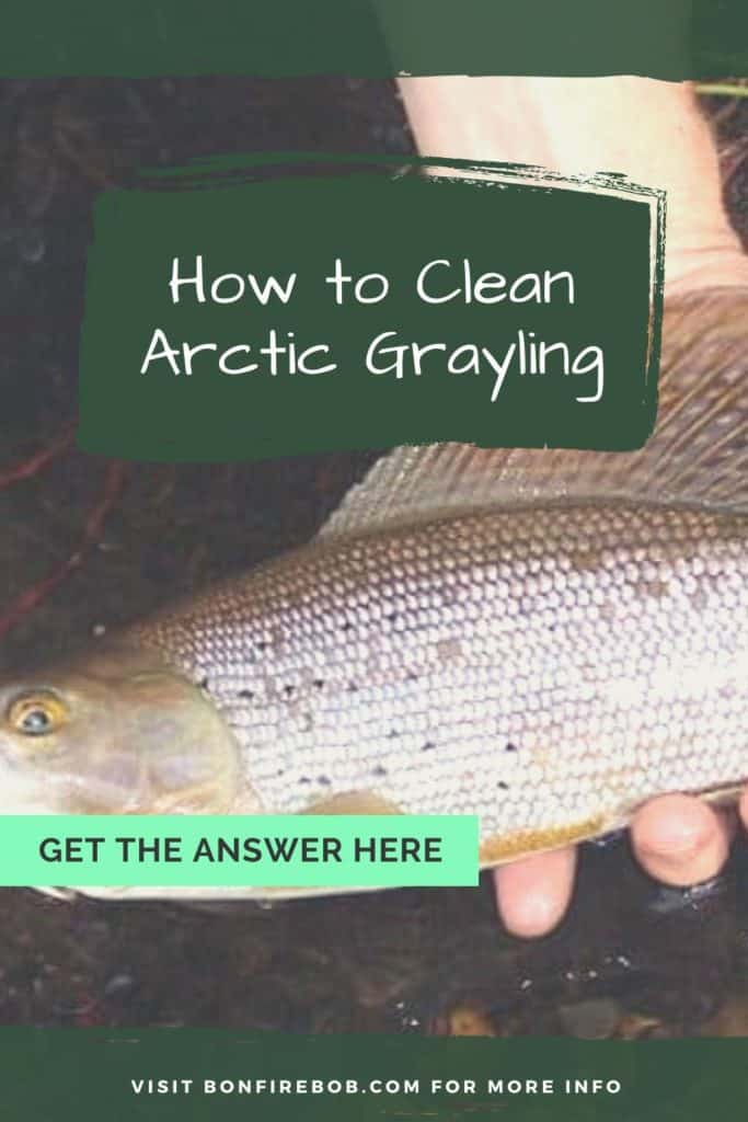 How to clean Arctic Grayling? Learn how to quickly clean an Arctic Grayling with this guide in 7 steps. #arcticgrayling #arcticgraylingfish #graylingfish #graylingfishing #graylingflyfishing #fishing #arcticgraylingfishing #catchgrayling #catcharcticgraying