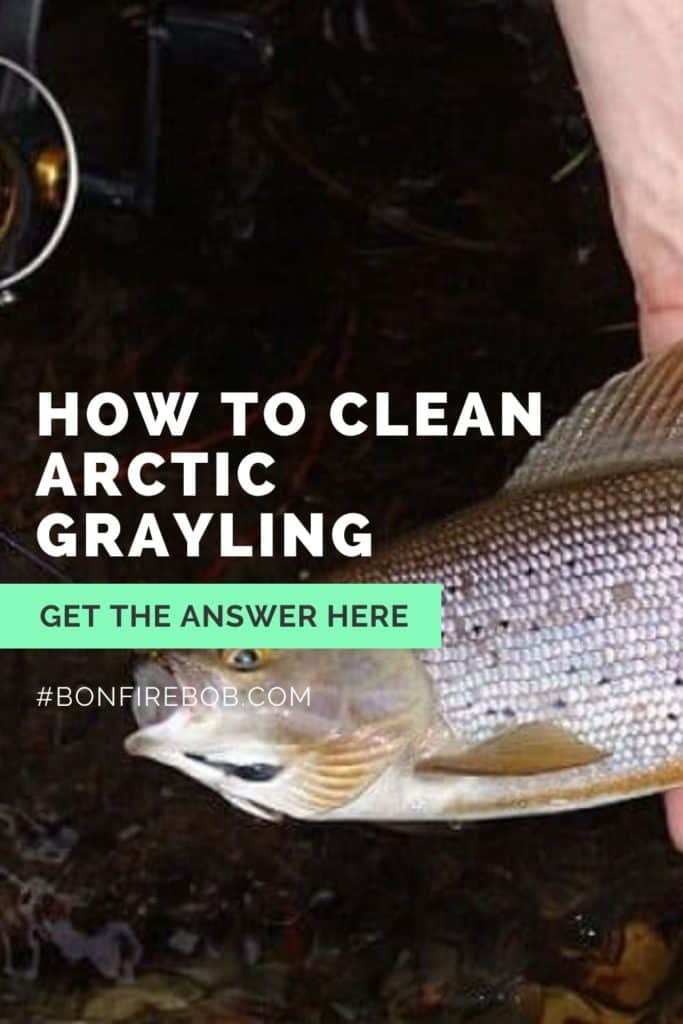 How to clean Arctic Grayling? Learn how to quickly clean an Arctic Grayling with this guide in 7 steps. #graylingfishing #graylingflyfishing #catchgrayling #catcharcticgraying #fishing #arcticgraylingfishing #arcticgrayling #arcticgraylingfish #graylingfish