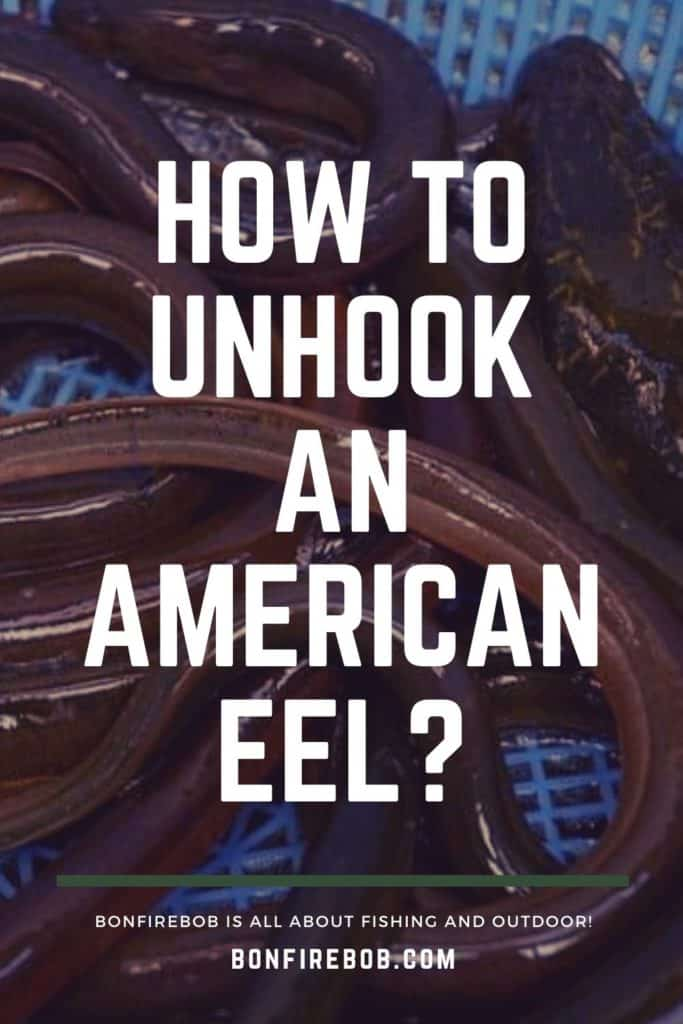 How to unhook an American Eel? Fishing hooks are most commonly removed from an American eel's mouth using a pair of strong forceps to pull it out. But there's more to it. Read it all here. #americaneel #americaneelfish #eelfish #eelfishtank #eelfishing #catchamericaneel #catcheel #eelfishing #fishingforeel