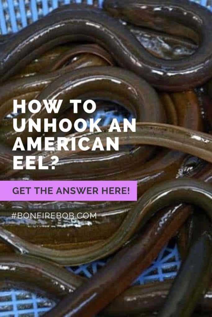 How to unhook an American Eel? Fishing hooks are most commonly removed from an American eel's mouth using a pair of strong forceps to pull it out. But there's more to it. Read it all here. #eelfishing #fishingforeel #eelfish #eelfishtank #americaneel #americaneelfish #eelfishing #catchamericaneel #catcheel