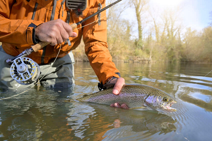 rainbow trout caught by a fly fisherman in autumn river