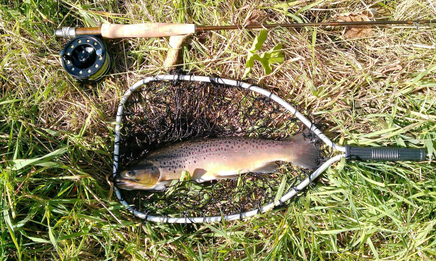 rainbow trout in fishing net and fly fishing rod
