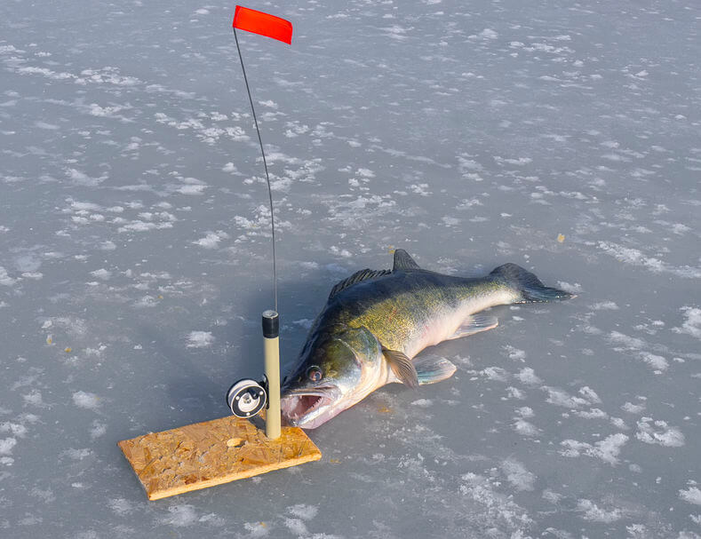 the huge walleye and tackle for fishing on the ice