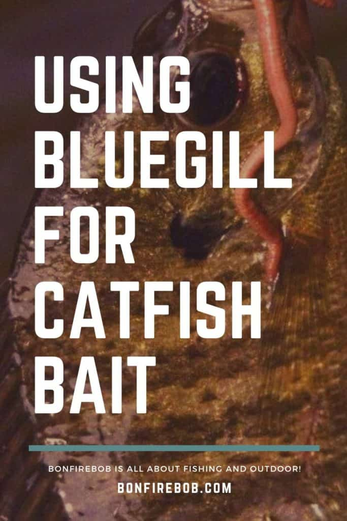 Using bluegill for catfish bait. Learn how to get the most out of using bluegill for catfish bait. Easy to read. #fishingbeginners #catfishspawn #catfishing #tipscatfish #catfishing #catchingcatfish #catfishbite #catfishfishing #catfishtips #fishing #fishingforcatfish