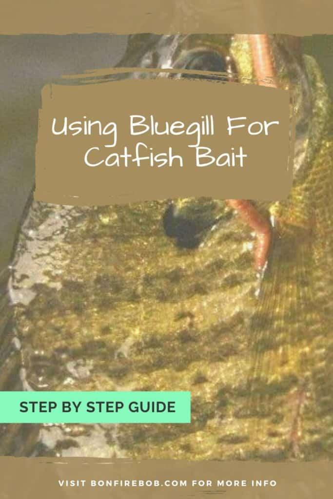 Using bluegill for catfish bait. Learn how to get the most out of using bluegill for catfish bait. Easy to read. #fishing #fishingtips #findingcatfish #catfishing #catfishfishing #catfishtips #fishingbeginners #catfishspawn #catfishbite #catfishing #catchingcatfish #bestfishingtips