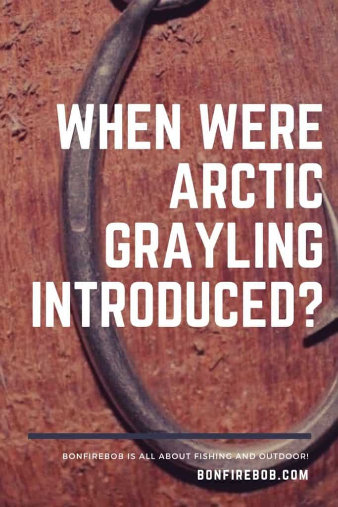 When were Arctic Grayling introduced? Learn all you need to know about the Arctic Grayling right here at bonfirebob. #graylingfishing #graylingflyfishing #catchgrayling #catcharcticgraying #arcticgraylingfish #graylingfish #fishing #arcticgraylingfishing #arcticgrayling