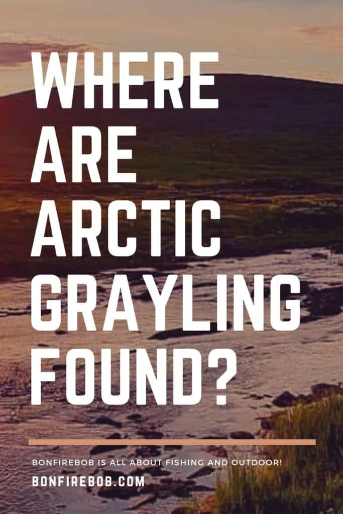 Where are Arctic Grayling found? The Arctic Grayling is an elusive fish, located at many places like Russia, Canada and Northern California. Read all you need to know here. #fishing #arcticgraylingfishing #catchgrayling #catcharcticgraying #arcticgraylingfish #graylingfish #graylingfishing #graylingflyfishing #arcticgrayling