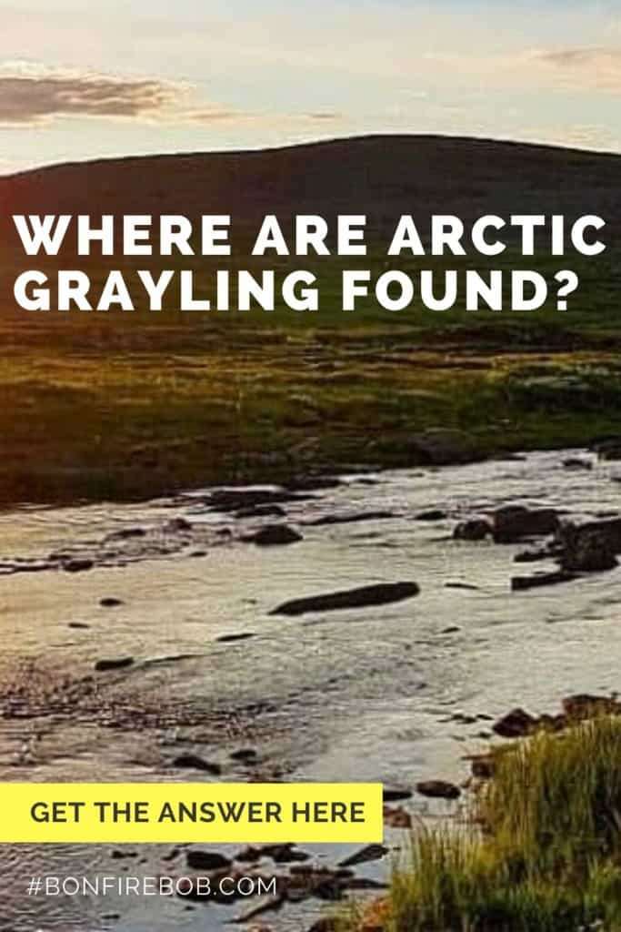 Where are Arctic Grayling found? The Arctic Grayling is an elusive fish, located at many places like Russia, Canada and Northern California. Read all you need to know here. #fishing #arcticgraylingfishing #catchgrayling #catcharcticgraying #graylingfishing #graylingflyfishing #arcticgrayling #arcticgraylingfish #graylingfish