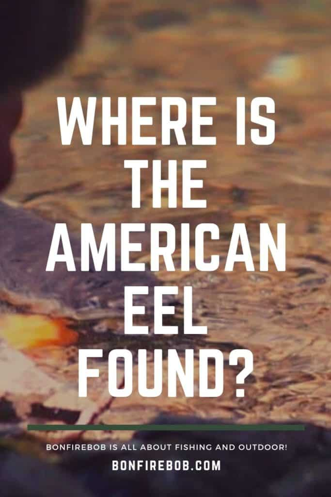 Where is the American Eel found? American Eels can be found in freshwater rivers and spawn in the ocean. Read this article if you want to know where you can find American Eels #americaneel #americaneelfish #eelfish #eelfishtank #eelfishing #catchamericaneel #eelfishing #fishingforeel #catcheel