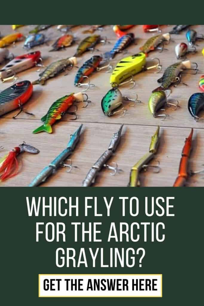Flies for Arctic Grayling. Which fly to use for the Arctic Grayling? Let me tell you what flies I use for catching Arctic Grayling. #arcticgrayling #graylingfishing #graylingflyfishing #arcticgraylingfish #graylingfish #fishing #arcticgraylingfishing #catchgrayling #catcharcticgraying