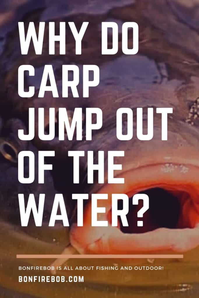 Why do carp surface and why do carp jump out of the water? I'll answer your question in this short article. Enjoy! #fishingbeginners #carpspawn #carptips #findingcarp #carpfishing #catchingcarp #carpbite #fishingtips #fishingforcarp #tipscarp #fishing